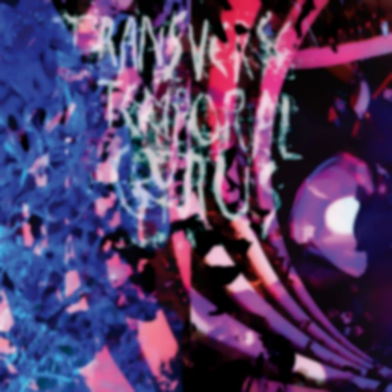 Listen: Animal Collective – Transverse Temporal Gyrus LP