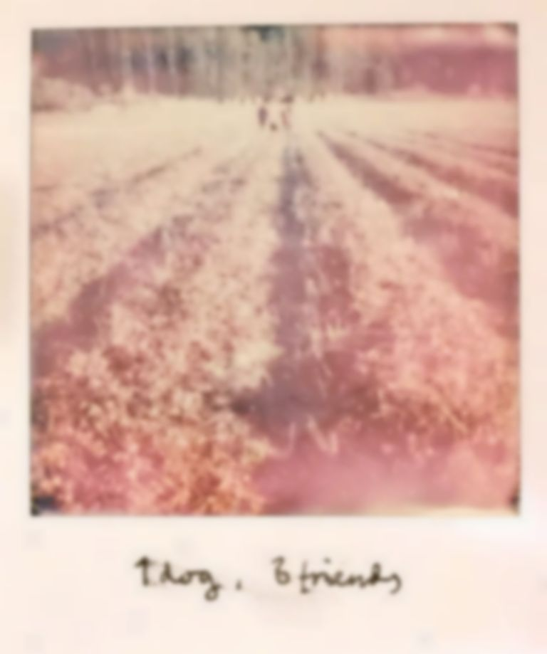 Polaroids with Intertwine in Norway